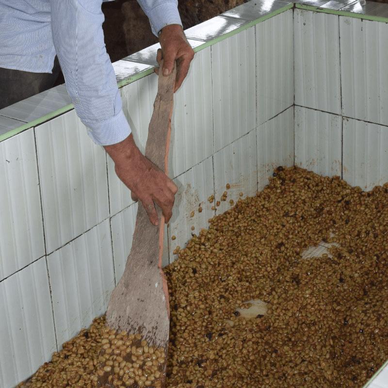 procesos-de-cafe-peru-yakumama