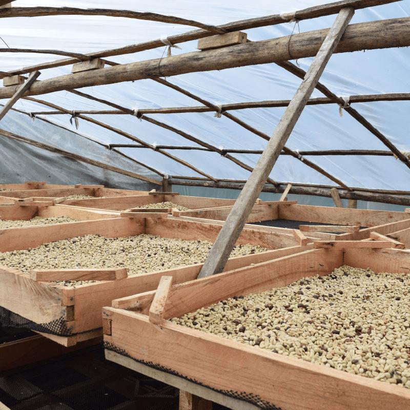 procesos-de-cafe-peru